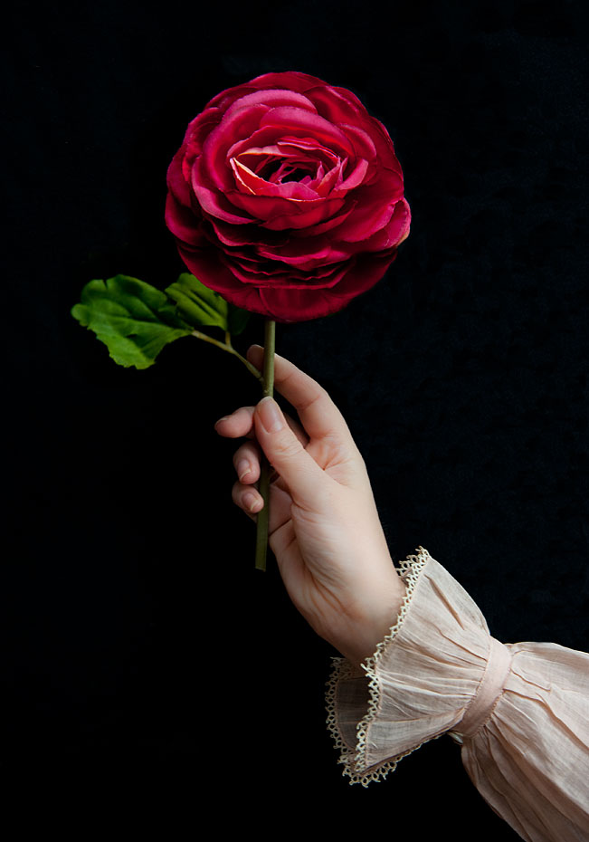 Amy-hand-red-rose.jpg