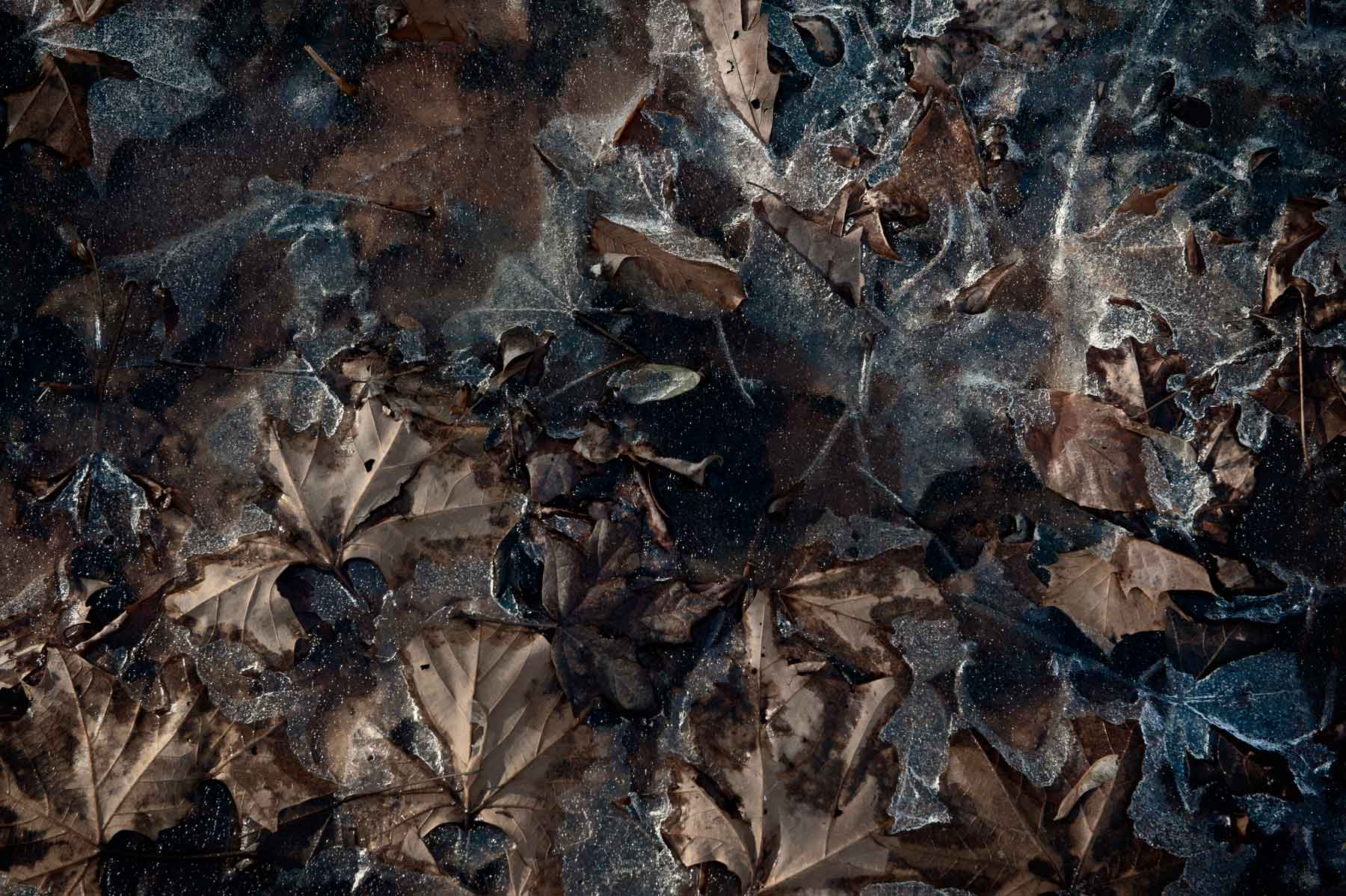 ice-leaves